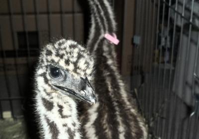 emu02
